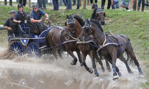 Horse-Wagon-Race with Sieltec Harness.